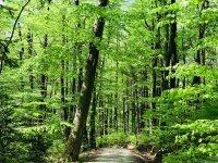 Bild zu Waldbaden im Mai - Glücksmomente in der Natur erleben