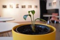 Pflanzen- und Samentauschbörse