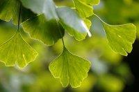 Bild zu Aktionstage Bäume für die Menschenrechte