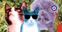 Bild zu Three Cool Cats Festival