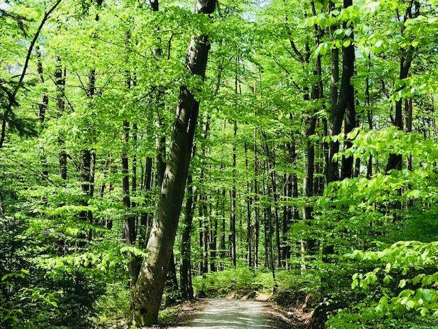 Waldbaden im Mai - Glücksmomente in der Natur erleben - © Elfi Dressler