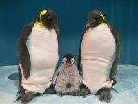 Bild zu Kindertheaterreihe: Pit Pinguin