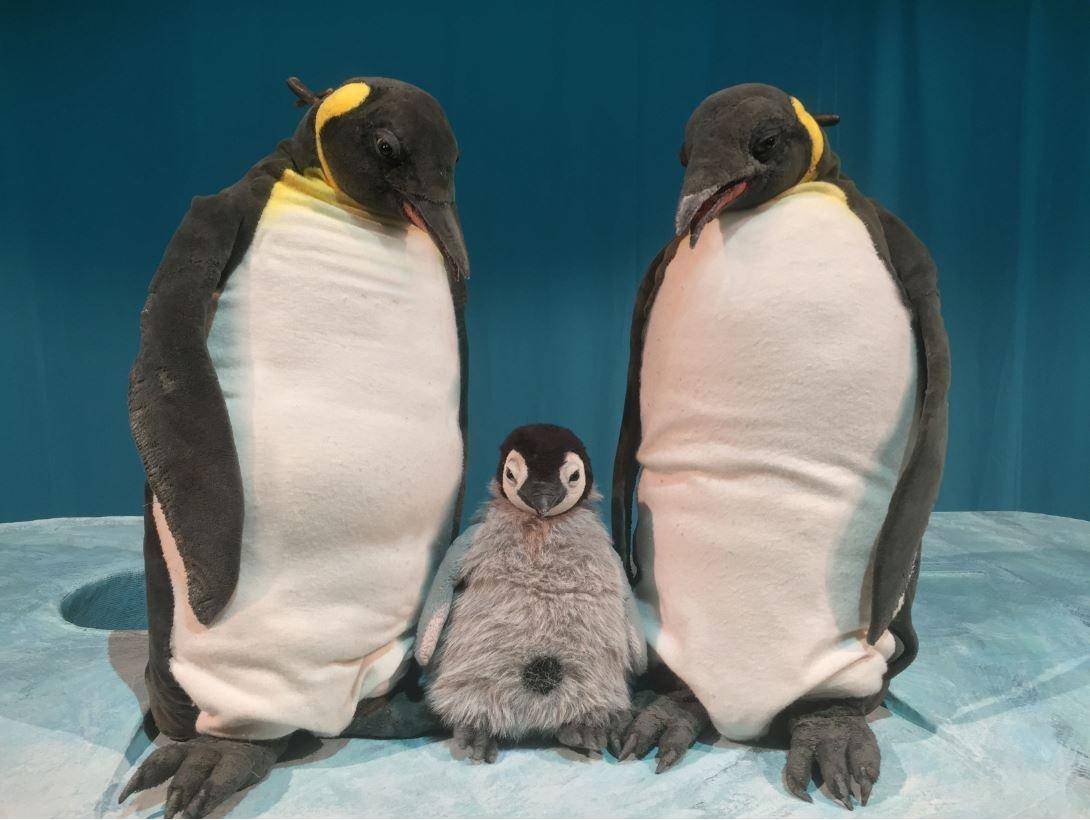 Kindertheaterreihe: Pit Pinguin - © Figurentheater Marotte