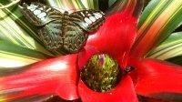 Lebensraum Regenwald - Faszinierend, geheimnisvoll und in großer Gefahr