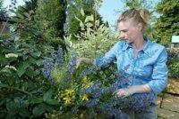 Bild zu Ein Vortrag von Landschaftsgärtnerin Dipl.-Ing. Jessica Pohl