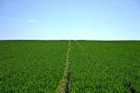 Landwirtschaft im Kapitalismus: unvernünftig, unverträglich, unverbesserlich