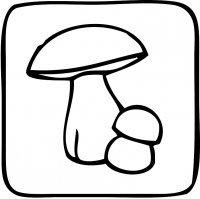 Kleine Pilzausstellung oder Bildvortrag Pilze einmal etwas näher betrachtet