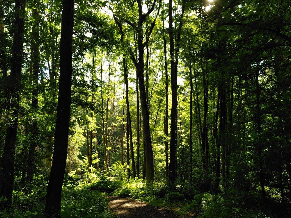 Mit allen Sinnen im Wald