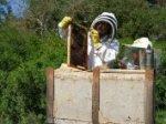 Besuch bei meiner süßen Freundin Biene
