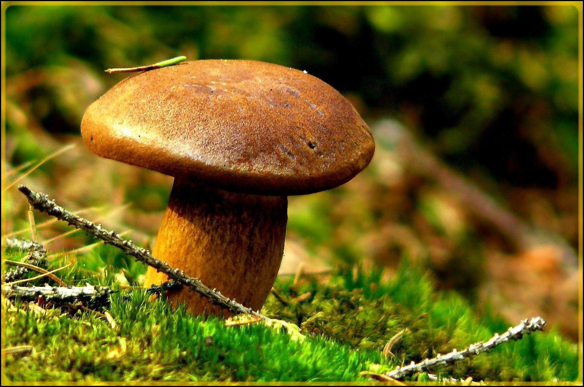 Pilze sammeln, aber welche? - © Pixabay