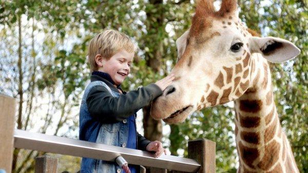 Mein Freund, die Giraffe - © Little Dream