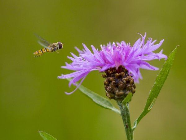 Insektensterben - © Roland Günter