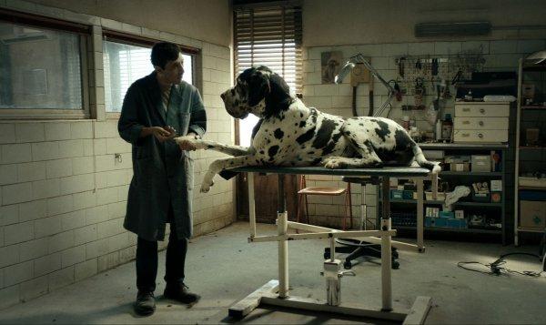 Dogman - © Alamode Film