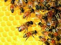 Bild zu Bienenfest