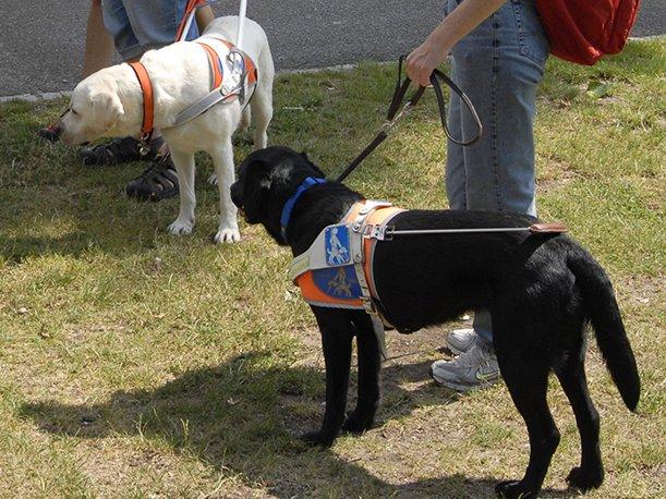 Wie arbeiten Blindenführhunde? ENTFÄLLT - © Veranstalter