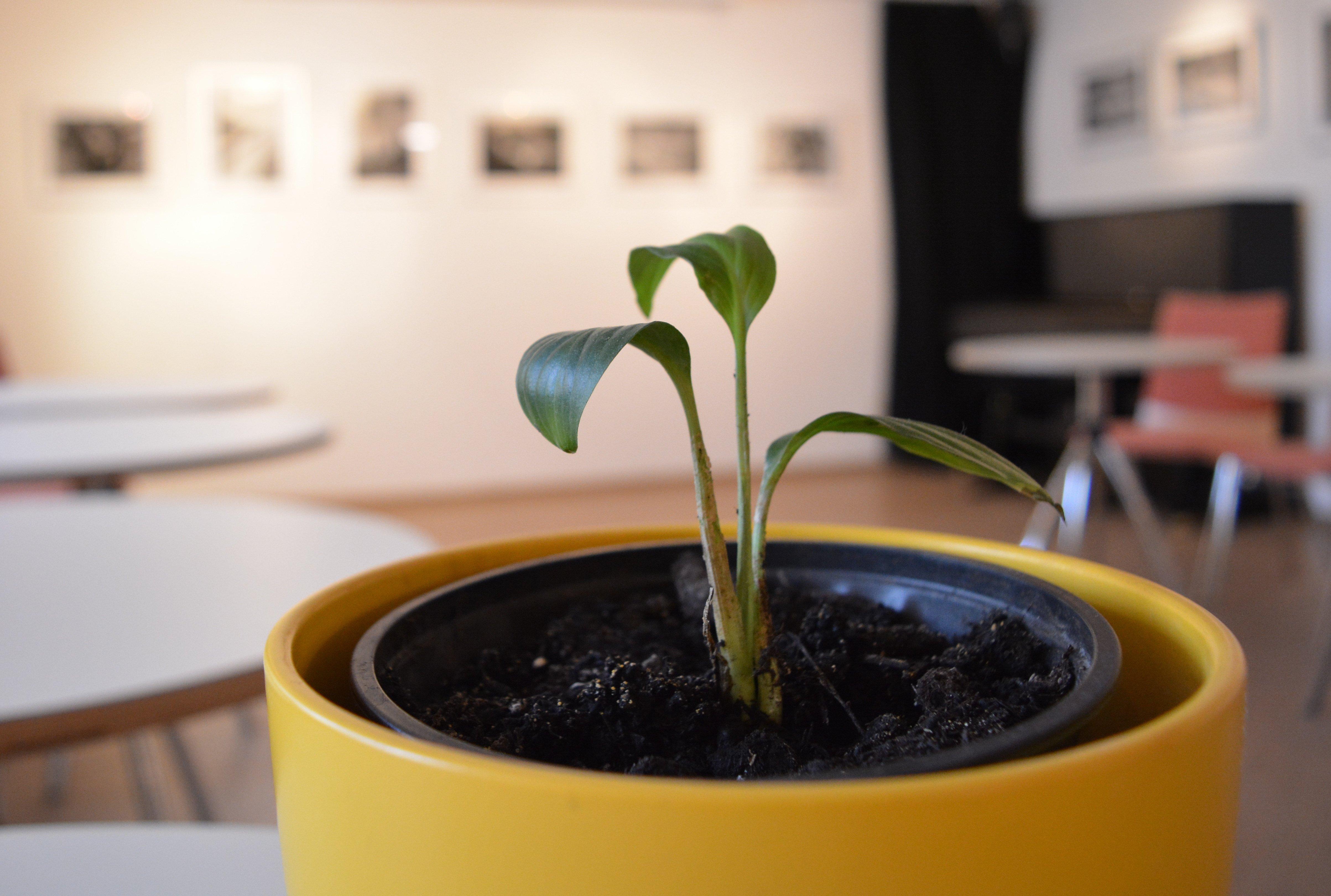 Pflanzen- und Samentauschbörse - © Veranstalter