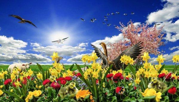 Musik am Nachmittag: Alle Vögel sind schon da... - © Veranstalter