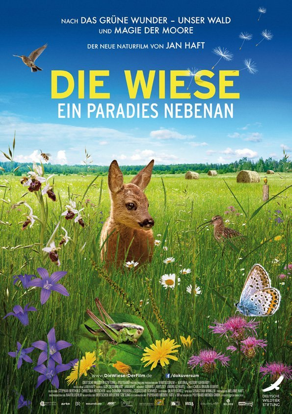 Die Wiese - Ein Paradies nebenan - © Polyband