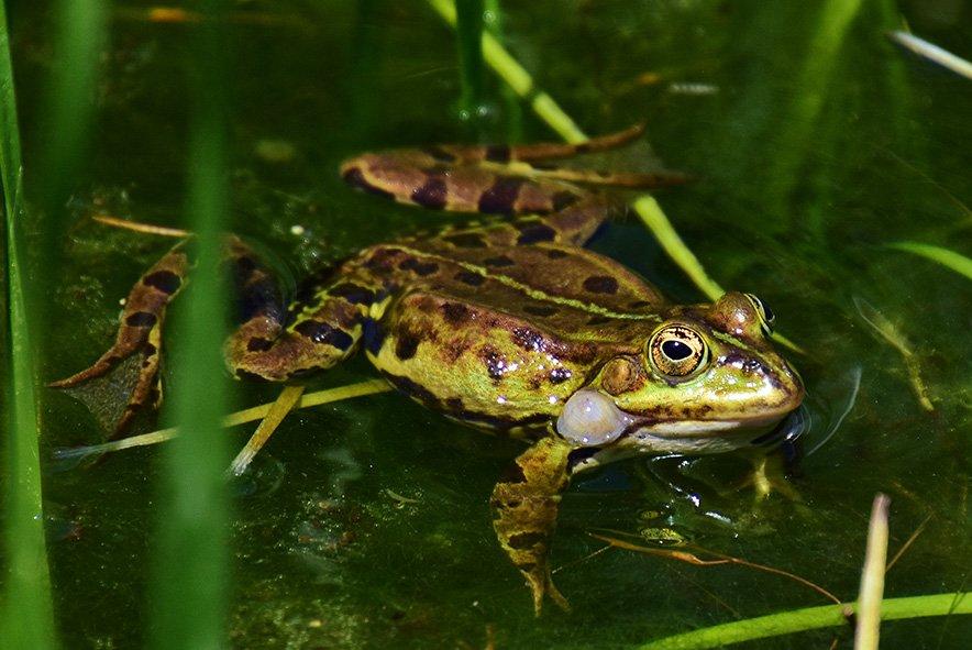Überlebenskünstler im und am Wasser: Pflanzen in Mooren, Sümpfen, Flüssen und Seen