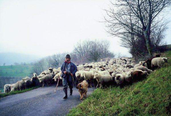 Hirtenreise ins dritte Jahrtausend - © Erich Langjahr